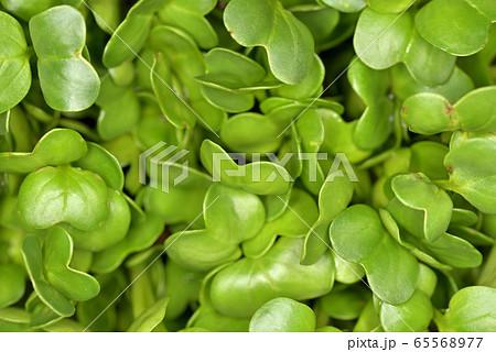 カイワレ大根の葉のクローズアップ 65568977