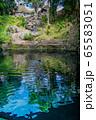 メキシコ バジャドリ  セノーテ・サシで泳ぐ人 65583051