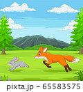 The fox is chasing a rabbit in an African savanna 65583575