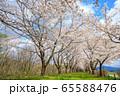角館の桜 桜並木 満開 青空 65588476