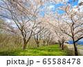 角館の桜 桜並木 満開 青空 65588478
