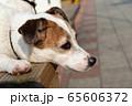 碼頭邊的小狗 動物 狗狗 漁人碼頭 犬 65606372