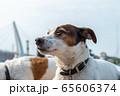 碼頭邊的小狗 動物 狗狗 漁人碼頭 犬 65606374