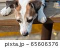 碼頭邊的小狗 動物 狗狗 漁人碼頭 犬 65606376