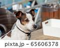 碼頭邊的小狗 動物 狗狗 漁人碼頭 犬 65606378