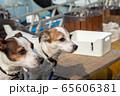 碼頭邊的小狗 動物 狗狗 漁人碼頭 犬 65606381