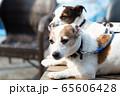 碼頭邊的小狗 動物 狗狗 漁人碼頭 犬 65606428