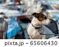 碼頭邊的小狗 動物 狗狗 漁人碼頭 犬 65606430