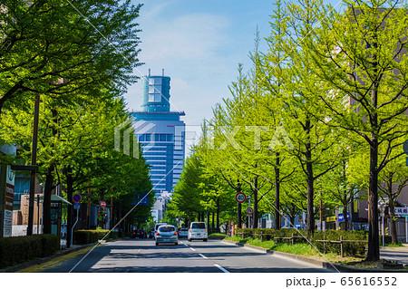 定禅寺通り(宮城県・仙台市)の新緑 65616552