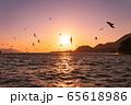 西伊豆の夕日と海鳥(静岡県) 65618986