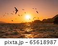 西伊豆の夕日と海鳥(静岡県) 65618987