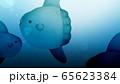 背景-海-マンボウ 65623384