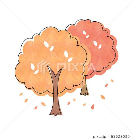 紅葉の木  2本 65628030