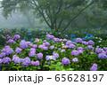 紫陽花の森 65628197