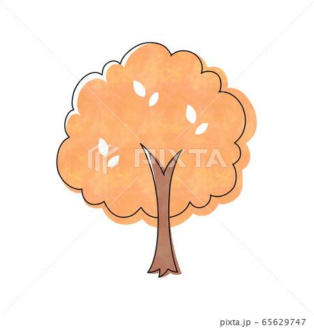 紅葉の木 65629747