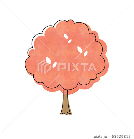 紅葉の木 65629815