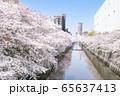 東京都 サクラの名所 目黒川の春 目黒清掃工場付近 65637413
