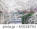 東京都 サクラの名所 目黒川の春 65638743