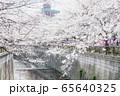 東京都 サクラの名所 目黒川の春 池尻大橋駅付近 65640325