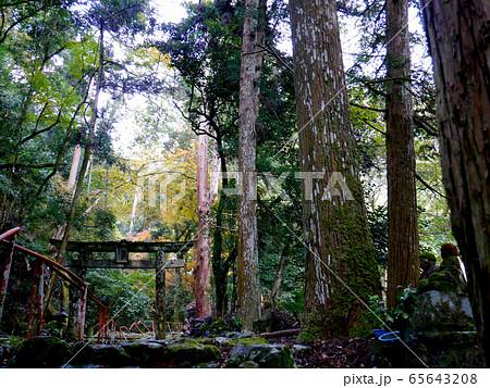 大木と鳥居 65643208