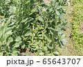 空豆畑 65643707