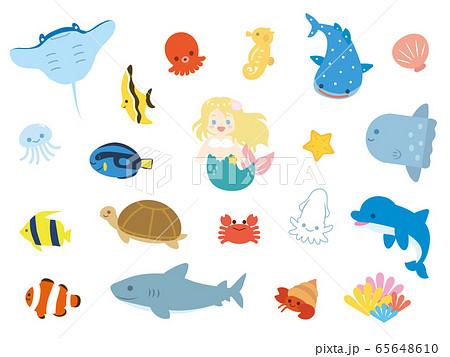 カワイイ海の生き物セット 65648610