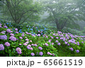 紫陽花の森 65661519