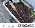 木の劣化 虫被害 白アリ 65662033