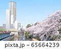 東京都 サクラの名所 目黒川の春 田楽橋にて 65664239