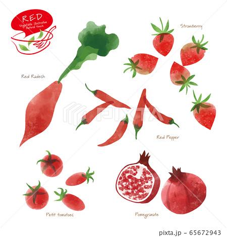赤い野菜のイラスト / アソート / 手描き風 65672943