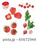 赤い野菜のイラスト / アソート / 手描き風 65672944