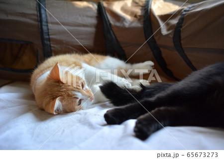 なかよし。しっぽで遊んでもらう。猫イメージ素材 65673273