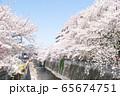 東京都 サクラの名所 目黒川の春 東急中目黒駅付近 65674751