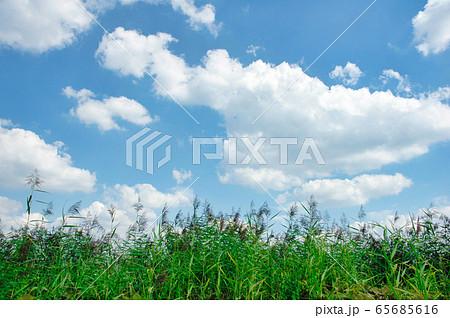 ドイツ ハンブルグの空 65685616