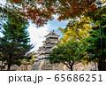 長野県松本市 紅葉時期の松本城 65686251