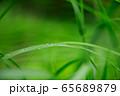 草原 雨の水滴 65689879