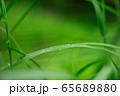 草原 雨の水滴 65689880
