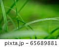 草原 雨の水滴 65689881