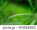 草原 雨の水滴 65689882