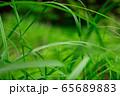 草原 雨の水滴 65689883