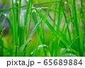 草原 雨の水滴 65689884