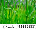 草原 雨の水滴 65689885