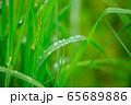 草原 雨の水滴 65689886