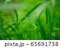 草原 雨の水滴 65691738