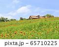 大阪・ハーベストの丘・夏・ひまわり 65710225