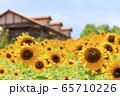 大阪・ハーベストの丘・夏・ひまわり 65710226