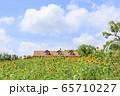 大阪・ハーベストの丘・夏・ひまわり 65710227