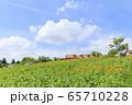 大阪・ハーベストの丘・夏・ひまわり 65710228