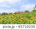 大阪・ハーベストの丘・夏・ひまわり 65710230