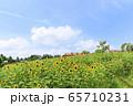 大阪・ハーベストの丘・夏・ひまわり 65710231